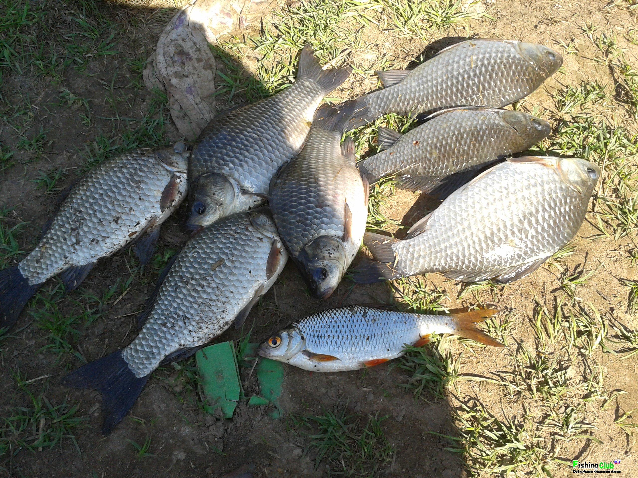 озеро янисъярви рыбалка отзывы