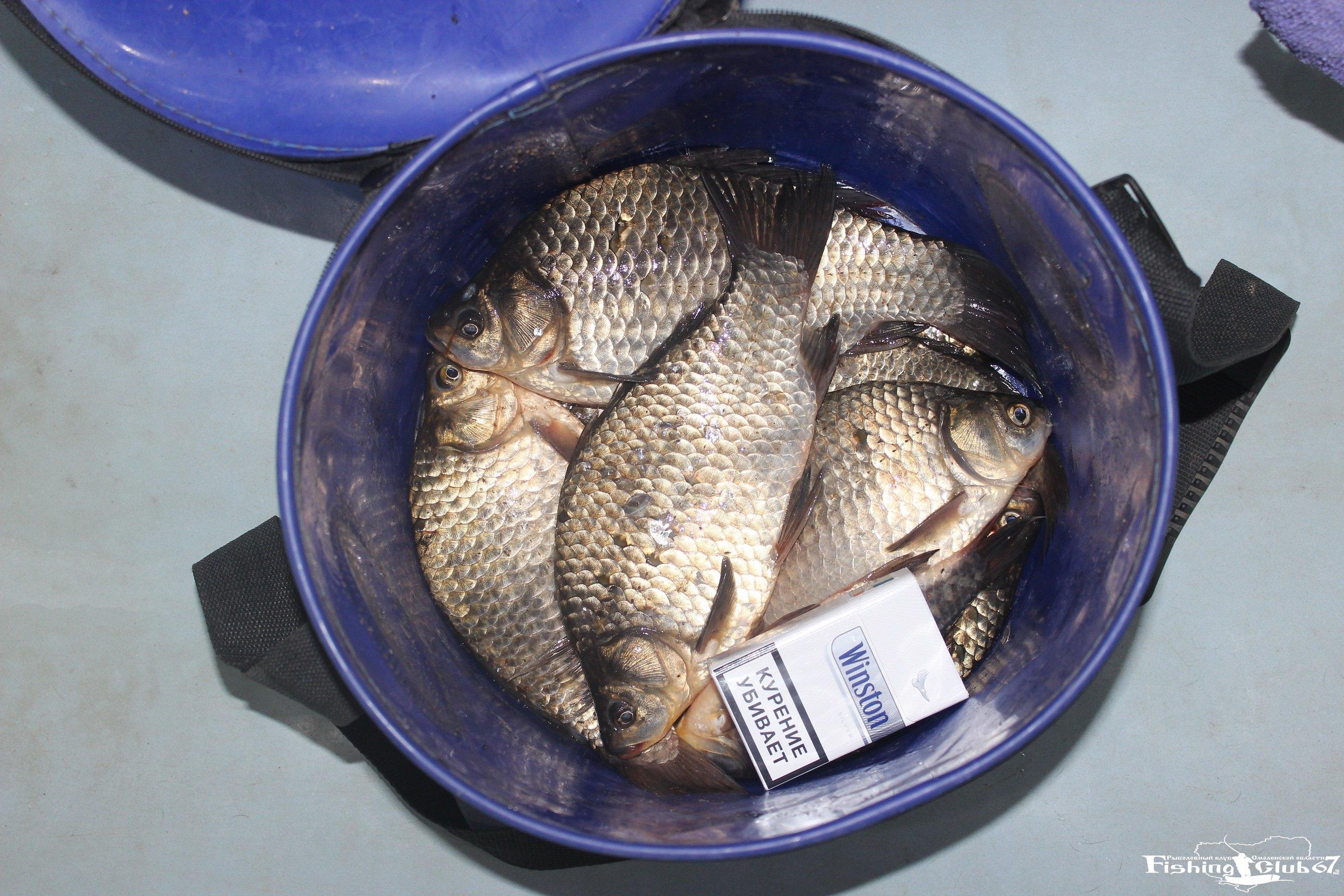 комбикорм для прикормки рыбы